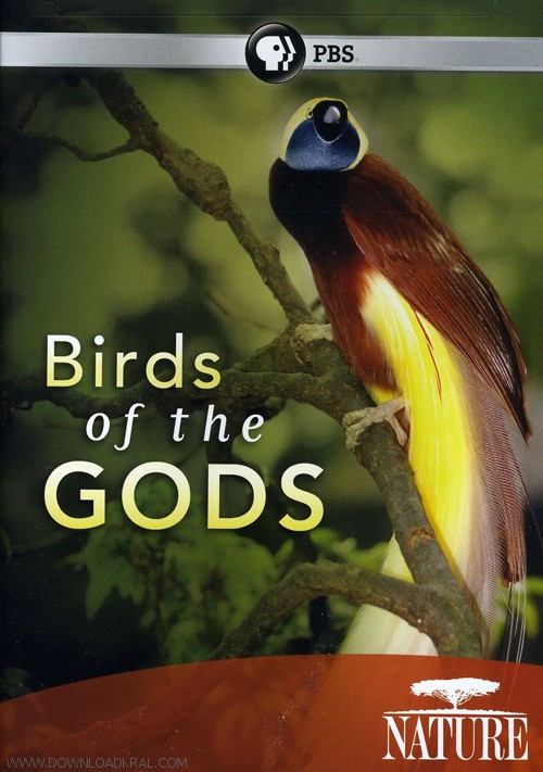 PBS – Nature Birds of the Gods