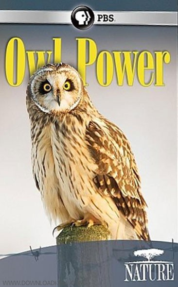 PBS Nature Owl Power 2015