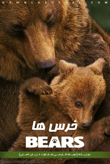 Bears 2014 posters